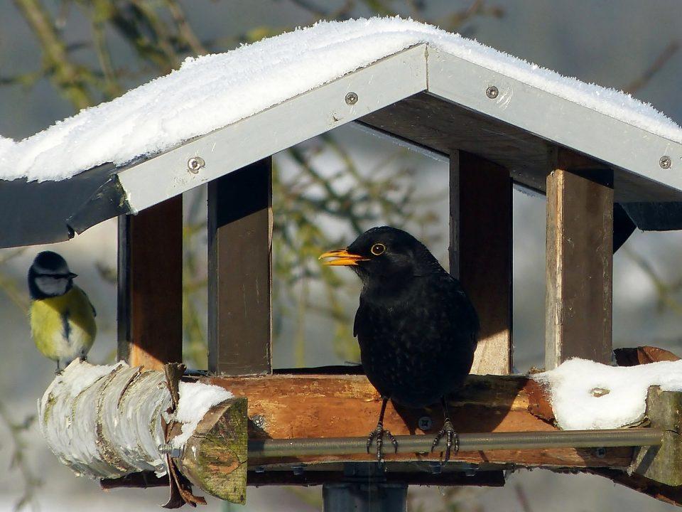 NABU Wintervogelzaehlung Vorschaubild