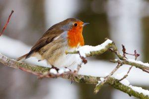 NABU Wintervogelzaehlung Abbildung 1