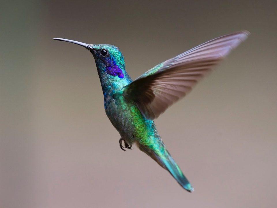 Vorschaubild kolibri schule und lernen