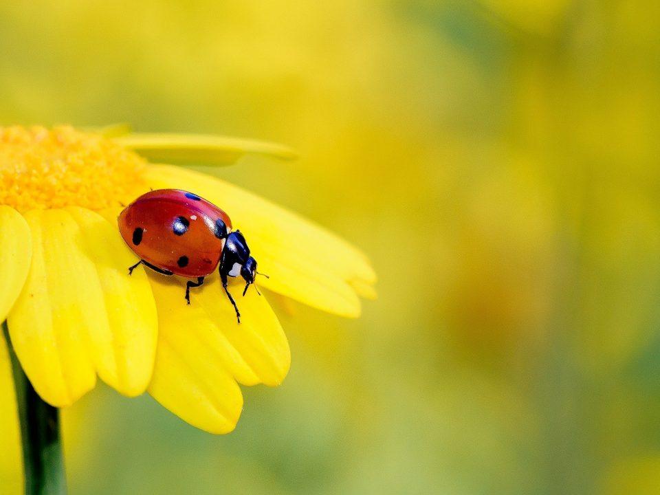 Vorschaubild1 Blogbeitrag Insektensommer 2021